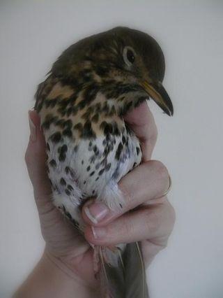 07 - Rescued bird