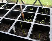 Seedlings_week1