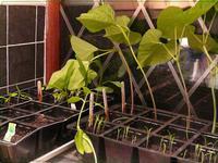 Seedlings_week2